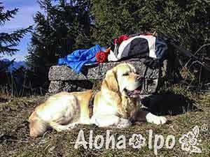 151030_AlohaIpo_web_0070