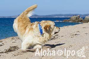 160611_AlohaIpo_0278-6252