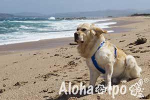 alohaipo_blog_170104-5877